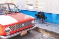 Made In Cuba. Dogs being dogs in Trinidad.