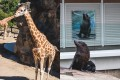 Animals posing in Taronga Zoo, Sydney